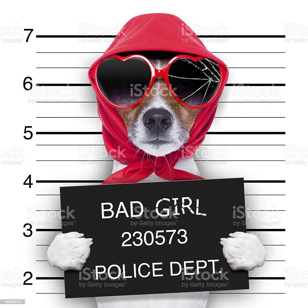 mugshot lady dog stock photo