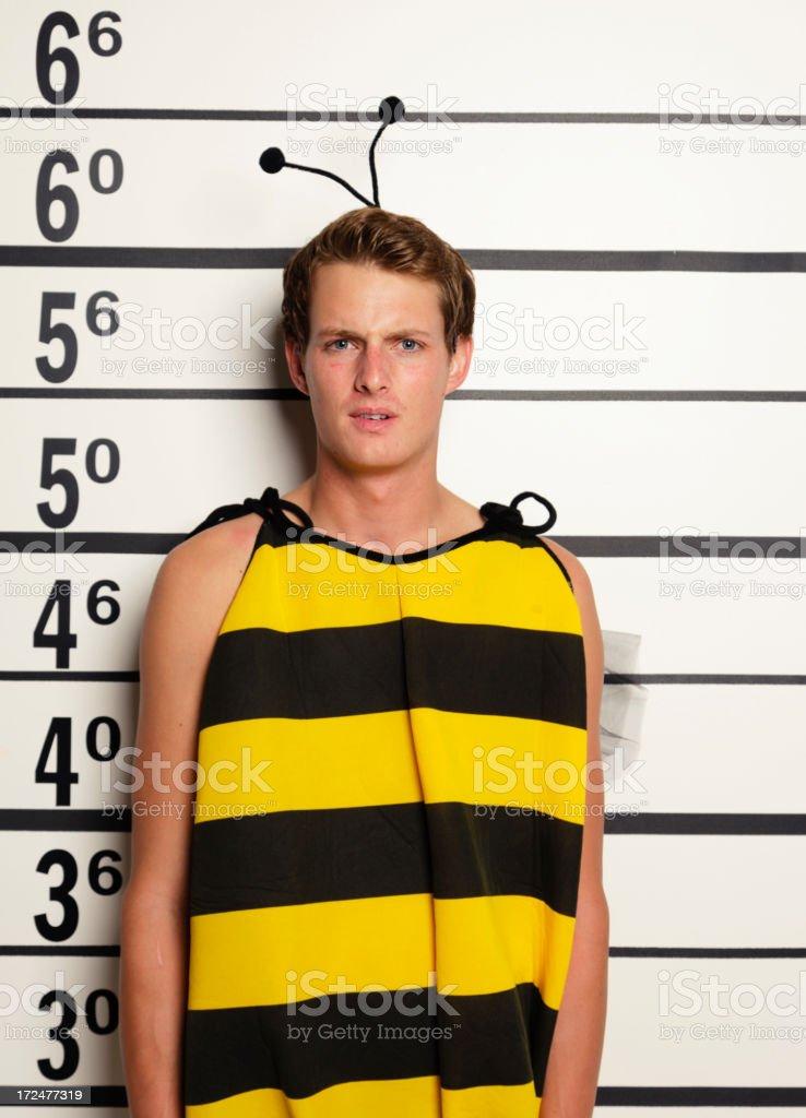 Mugshot of a Bumble Bee stock photo