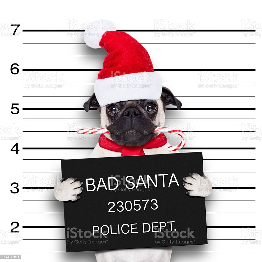 mugshot santa dog stock photo