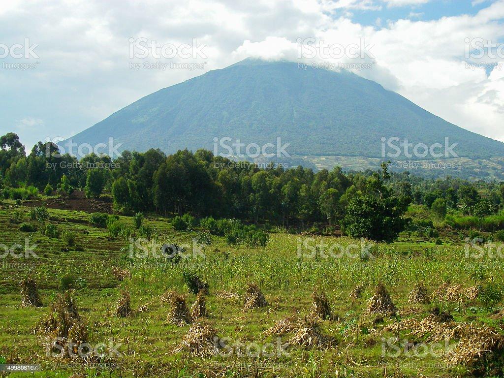Muhabura Volcano rising behind Eucalyptus Forest and Fields Rwanda stock photo