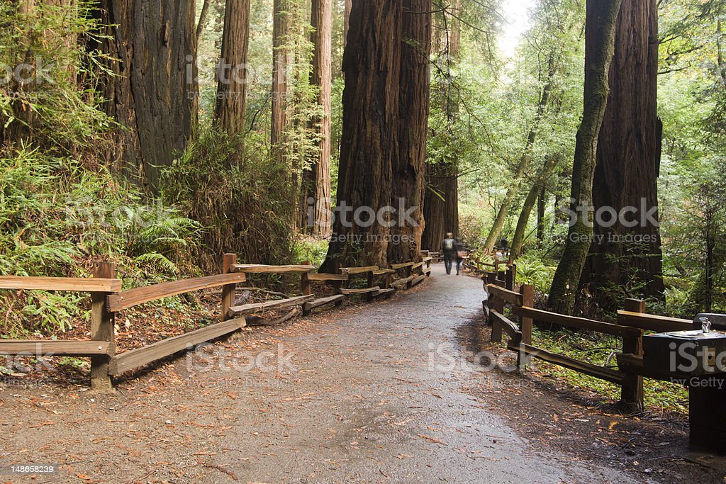 Muir Woods in Marin County, California stock photo