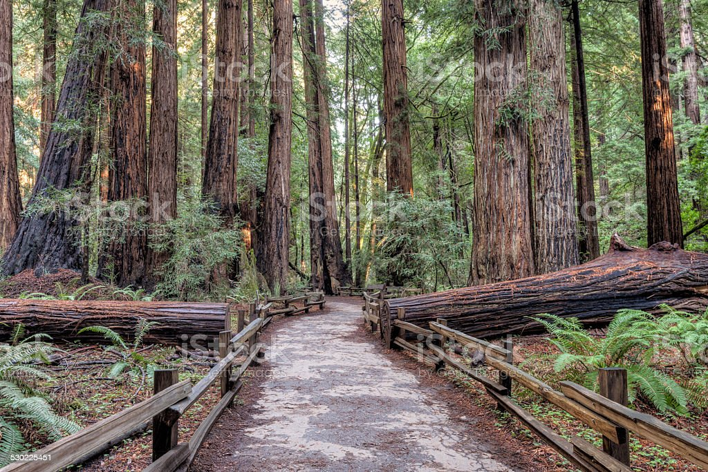 Muir Woods National Monument Hiking Path stock photo