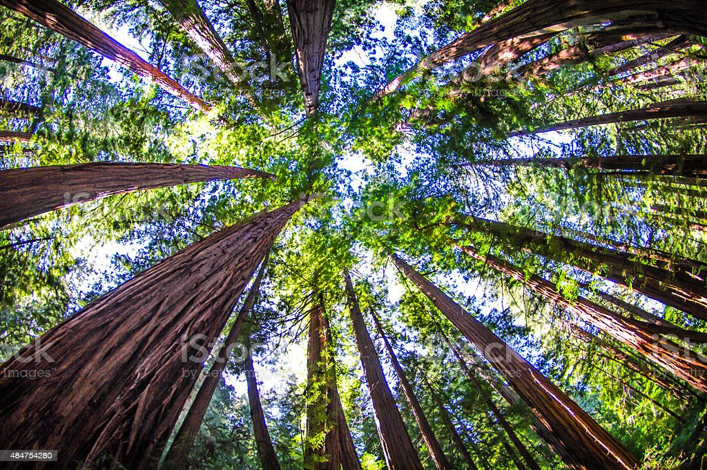 Muir Woods stock photo