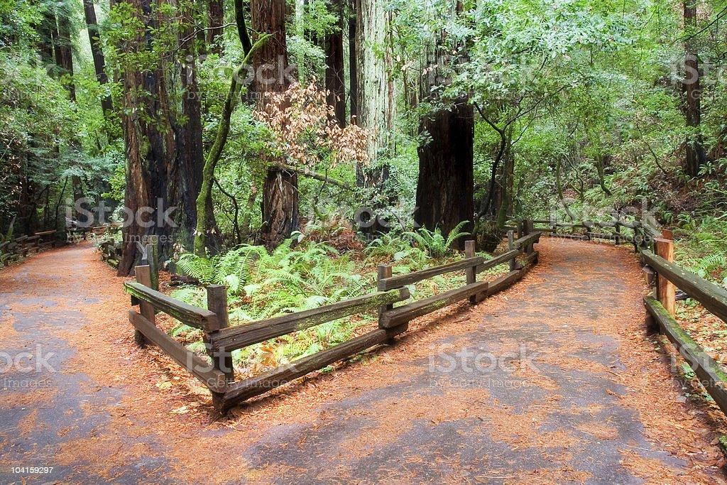 Muir Woods Walkways stock photo