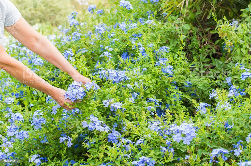 mujer toca  las flores photo libre de droits