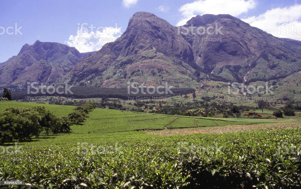 Mulanje Massif a major Batholith along the Great Rift of southern Africa rising above tea plantations in Malawi Africa stock photo