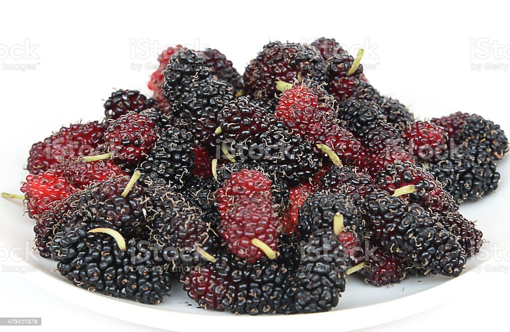 Mulberry numerous enough to eat on a white background. stock photo