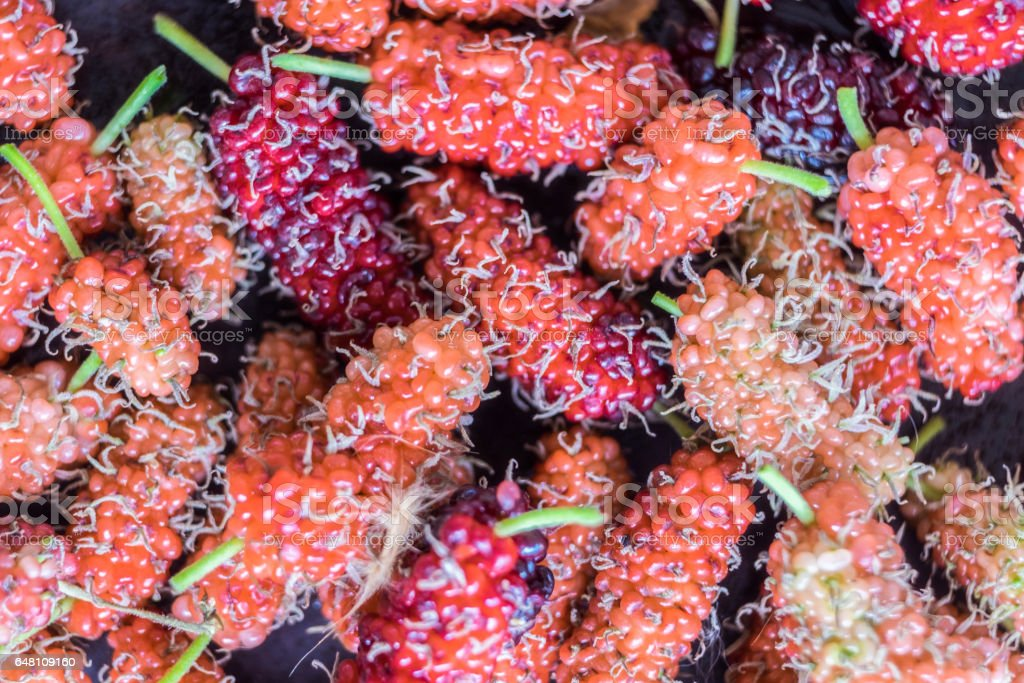 Mulberry ripe colorful valuable overlap pattern stock photo