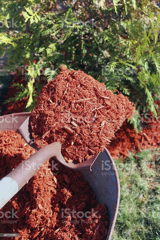 Mulching bushes with shovel and wheelbarrow stock photo