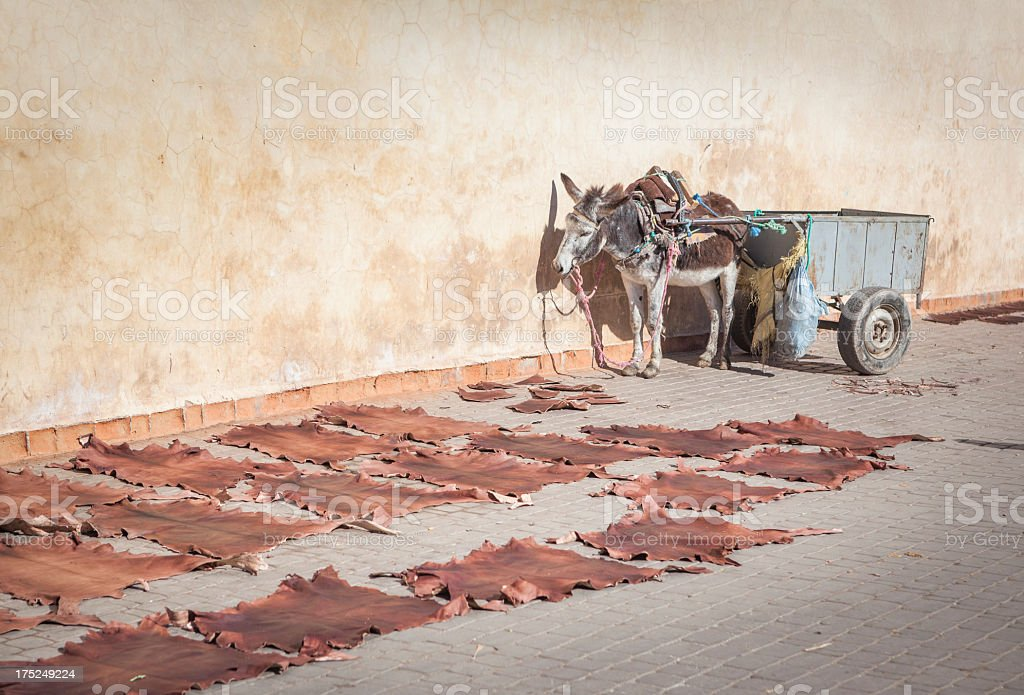 Mule and cart waiting for next cartload royalty-free stock photo