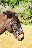 Mule brown graze side angle and chinese plum