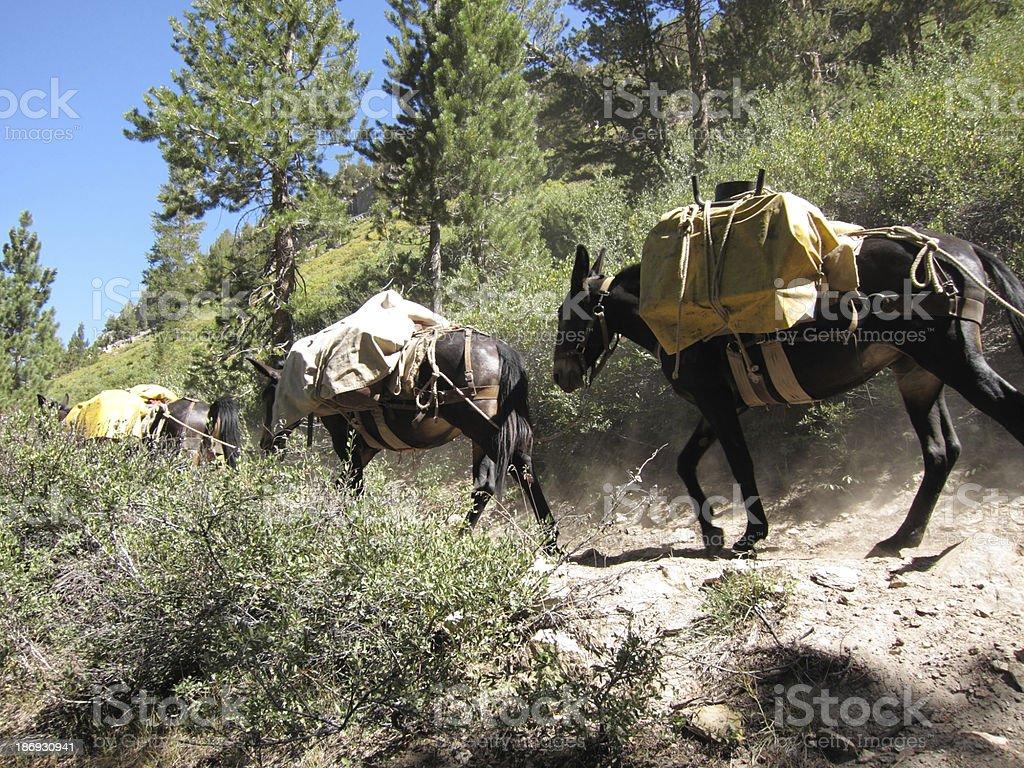 mule caravan going through mountain pass stock photo