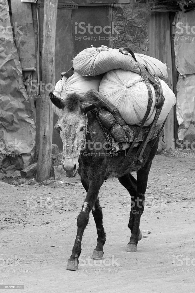 Mule Carrying Load royalty-free stock photo