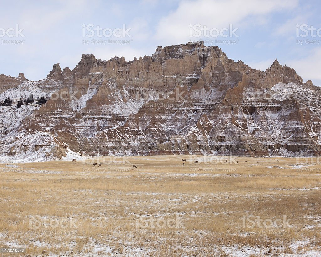 Mule Deer Grazing in Badlands Park stock photo