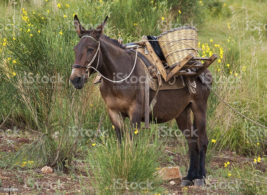 Mule in bushes royalty-free stock photo