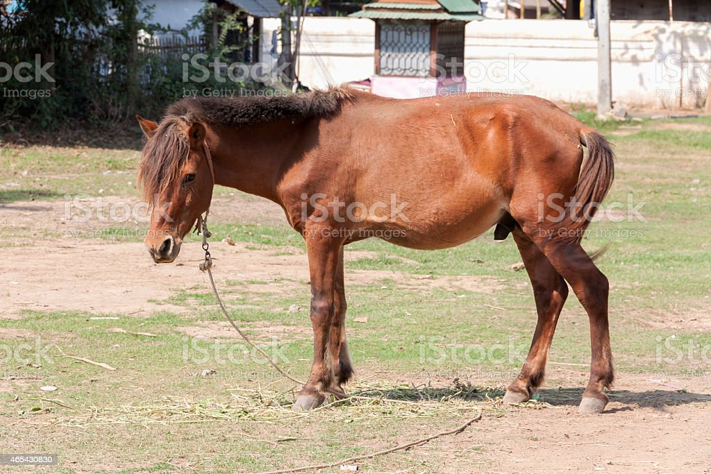 Mule in color standing royalty-free stock photo