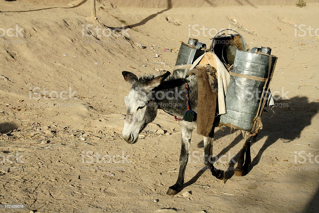 mule in the desert royalty-free stock photo