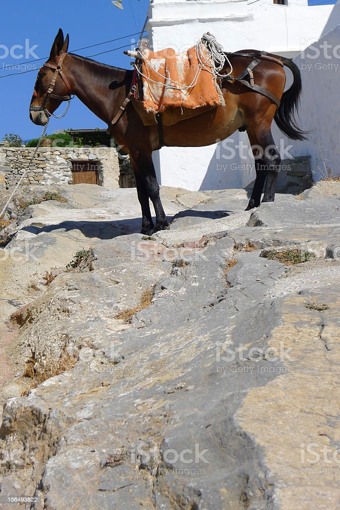 Mule on the Greek Island of Syros royalty-free stock photo
