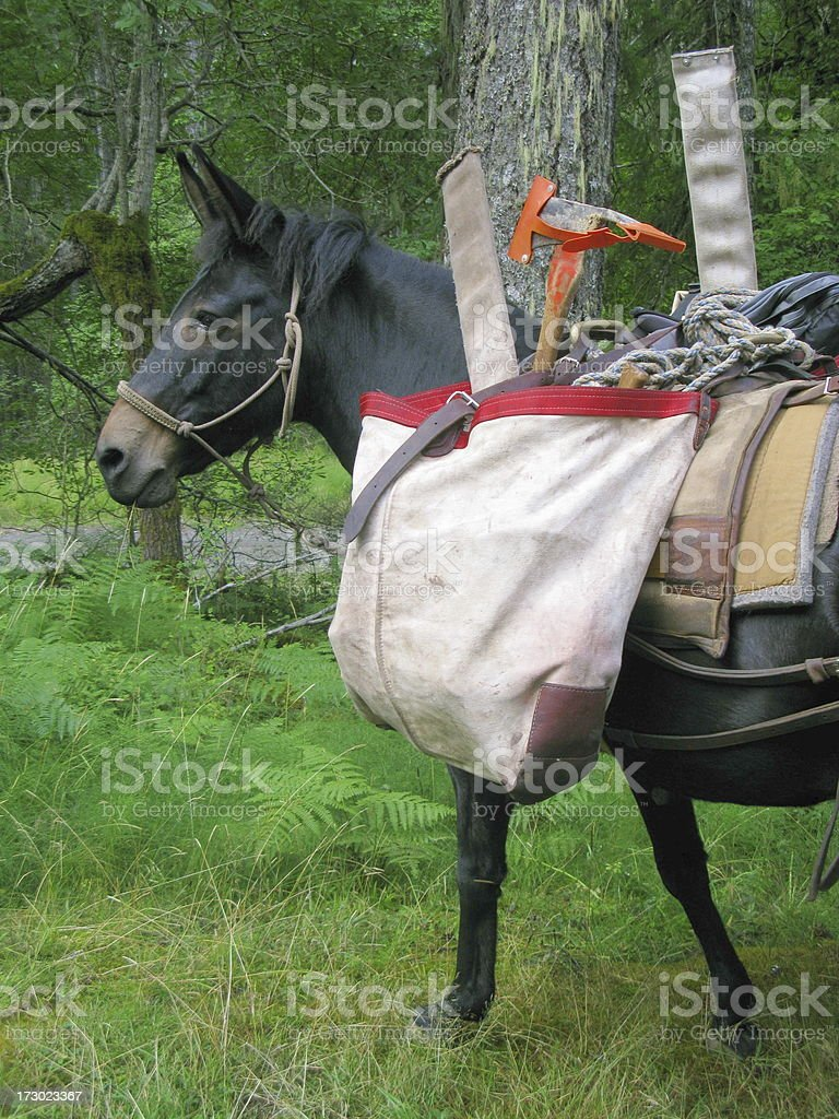 Mule Packed Donkey Horse royalty-free stock photo