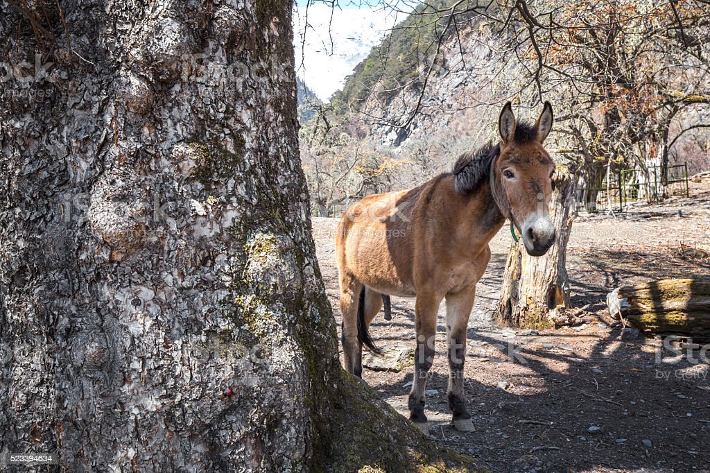 Mule standing under the tree stock photo