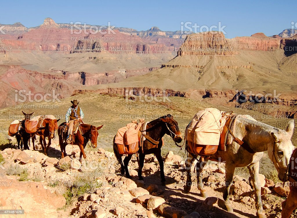 Mule Train in the Grand Canyon royalty-free stock photo