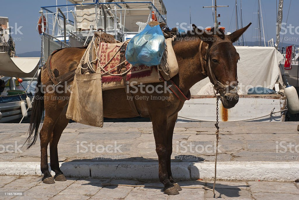 Mule waiting at harbour royalty-free stock photo