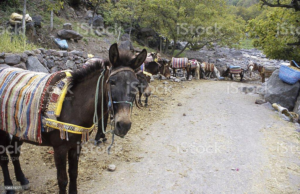 Mules stock photo