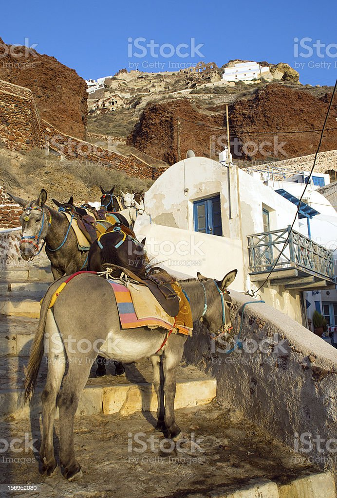 Mules waiting in Ammoudi royalty-free stock photo