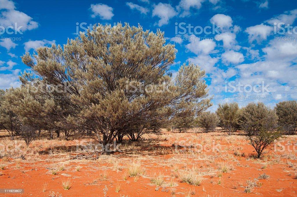 Mulga country stock photo