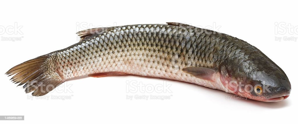 Mullet stock photo