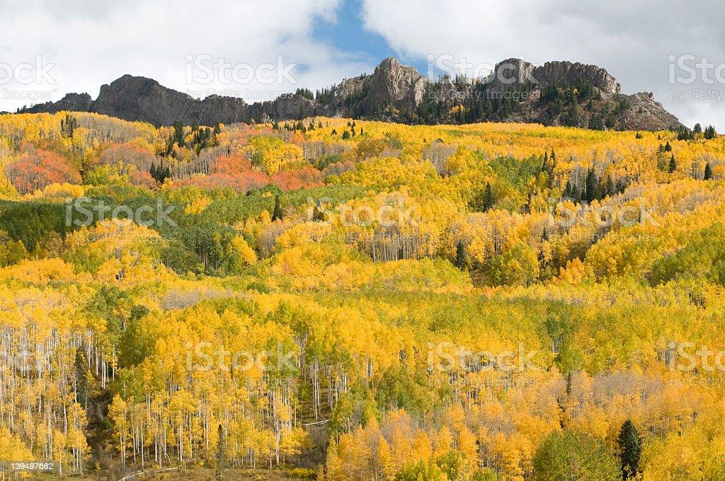 Multi Colored Aspen Grove by Kebler Pass stock photo