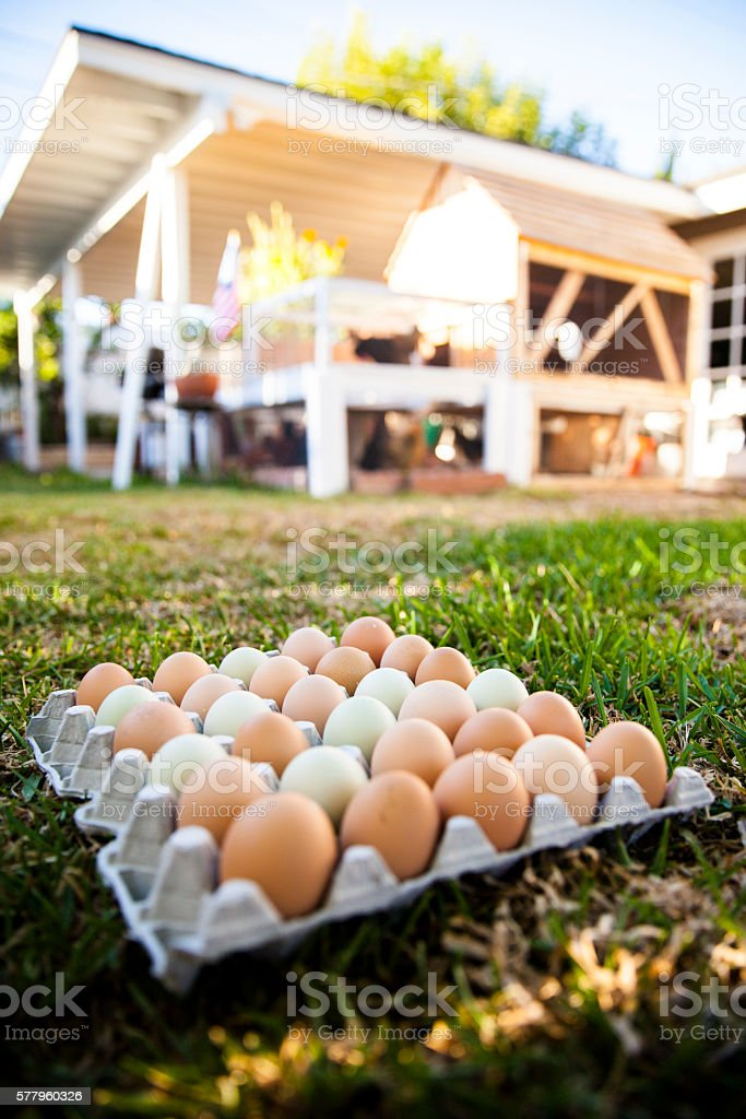 Multi colored eggs in front of chicken coop stock photo
