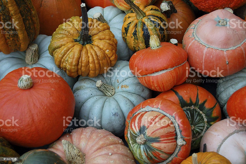 multi colored pumpkins, cucurbita pepo stock photo