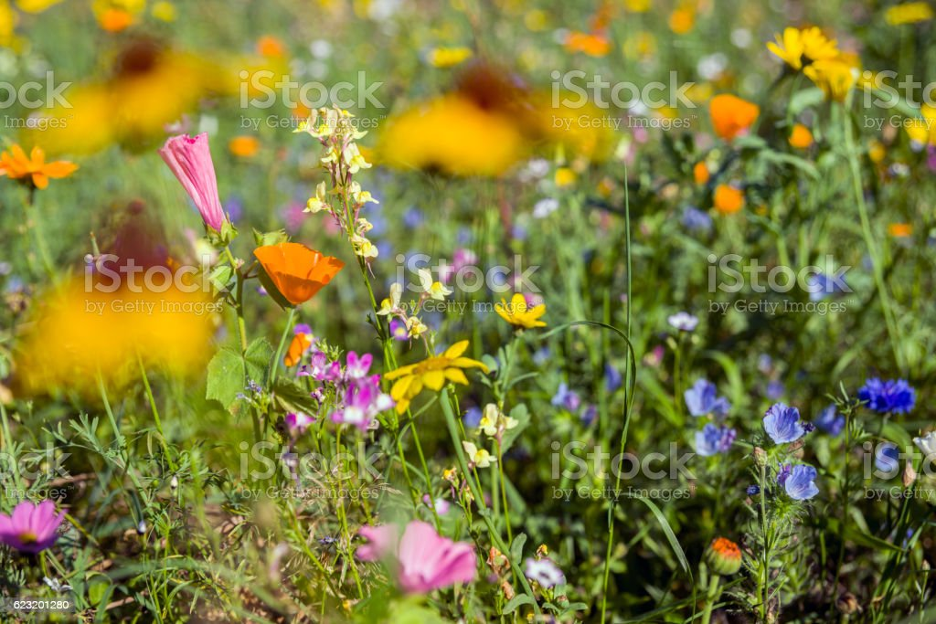 Multi colored wildflowers on meadow stock photo