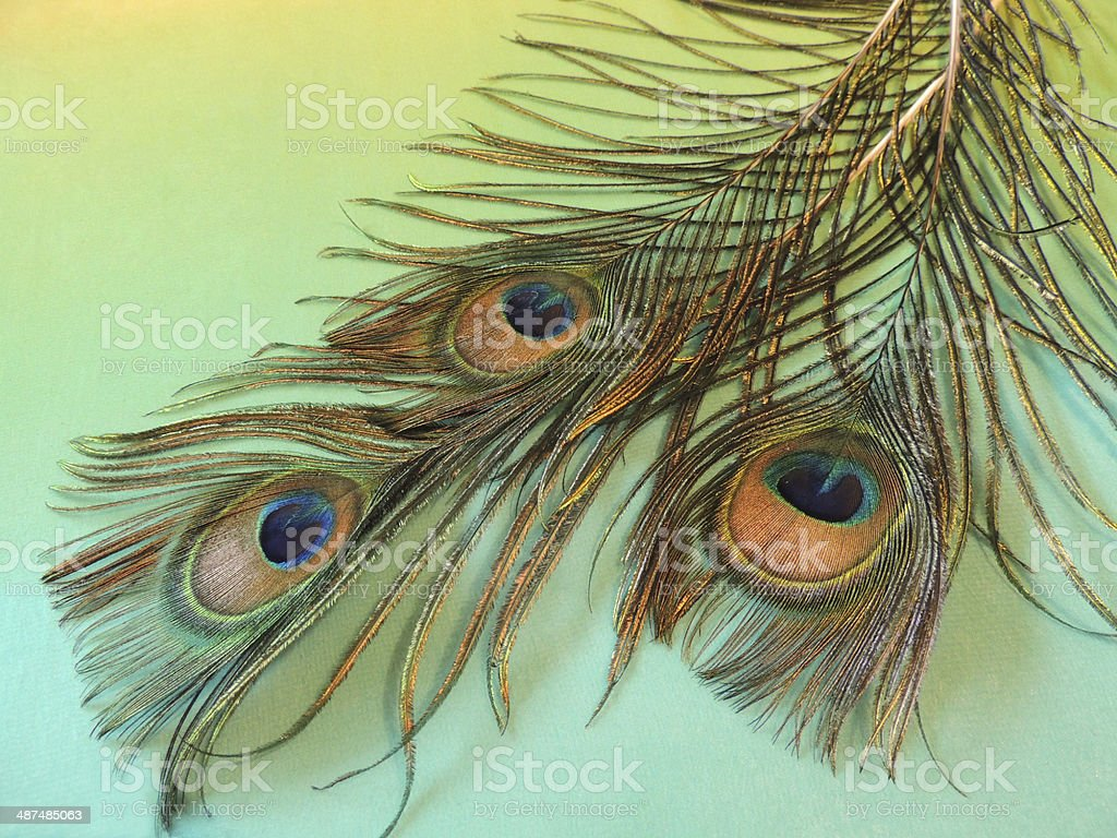 Multi Colored,Elegance, Backgrounds, peacock feather, stock photo