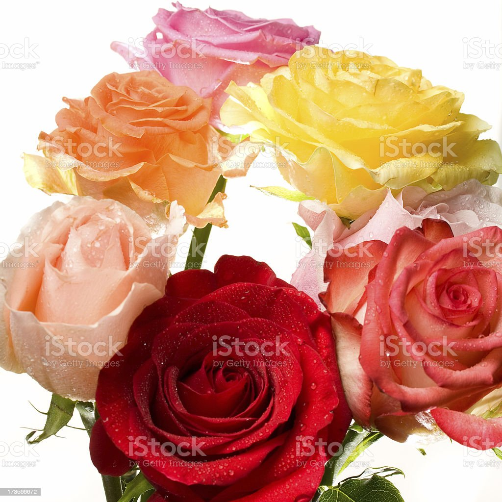 Multi coloured rose bouquet stock photo
