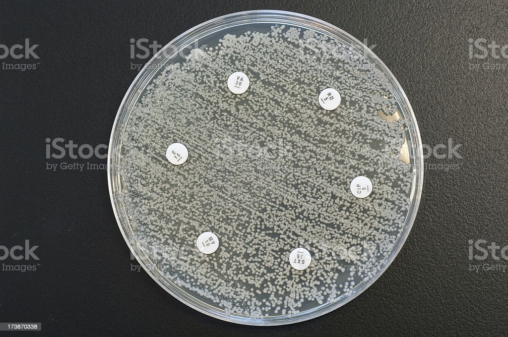 Multi resistant bacterium royalty-free stock photo