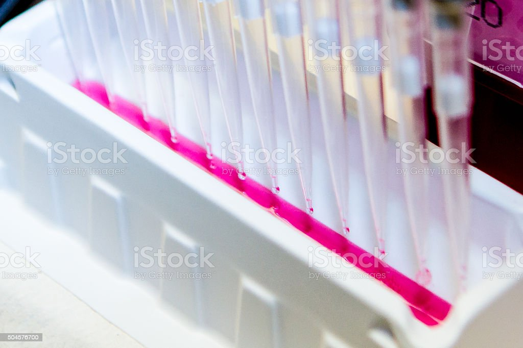 Multi-Channel Pipette and Pink Fluid stock photo