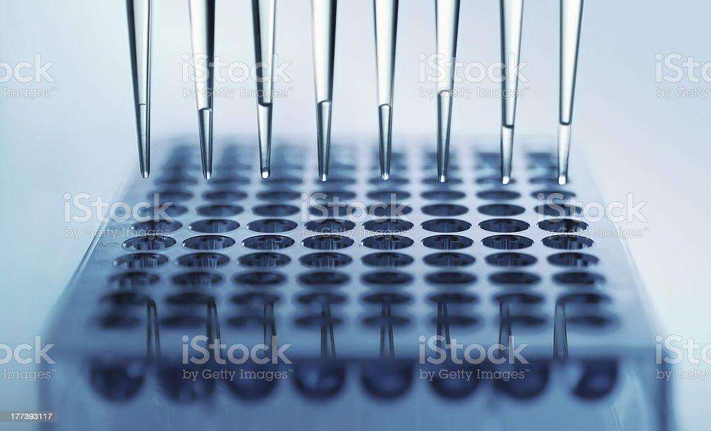 multichannel pipette stock photo
