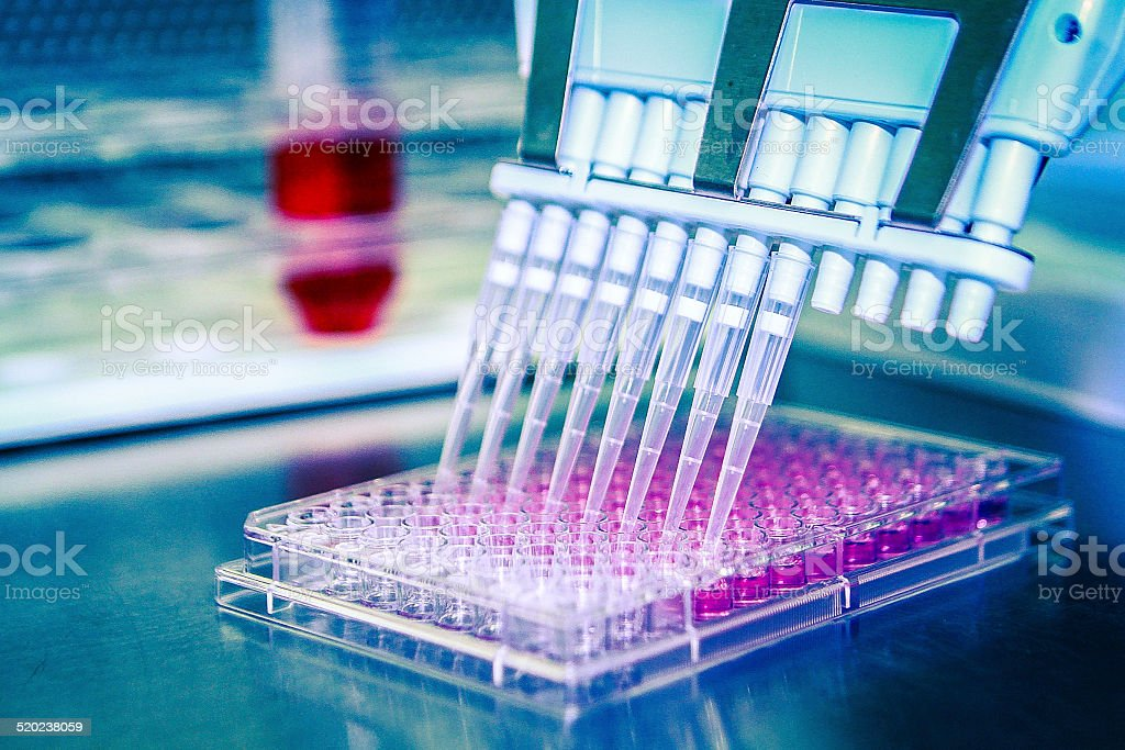 Multichannel Pipette With Cell Culture Plate. stock photo