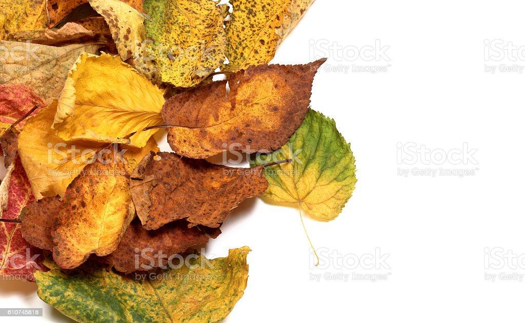Multicolor autumn leafs stock photo