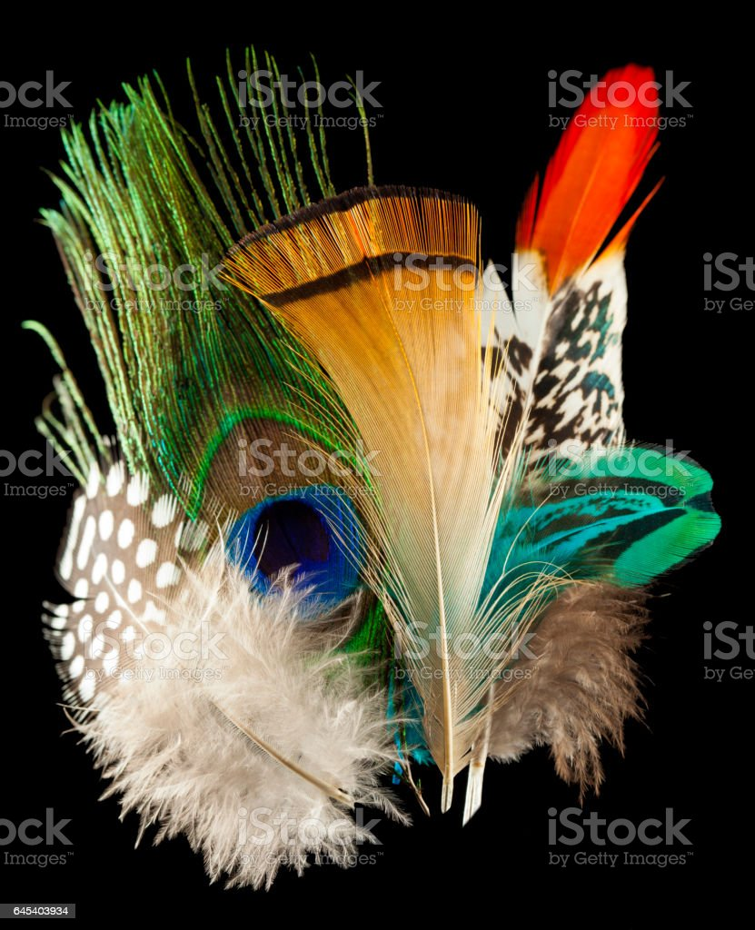 Multicolor feathers over black stock photo