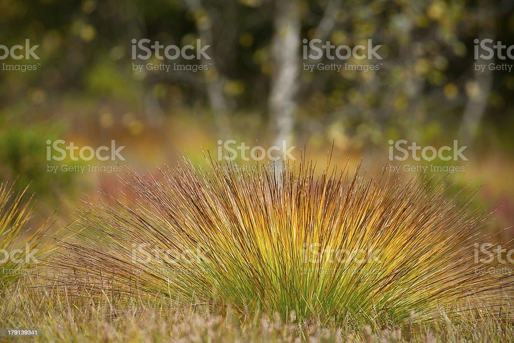 Multicolored autumn vegetation on the pe royalty-free stock photo