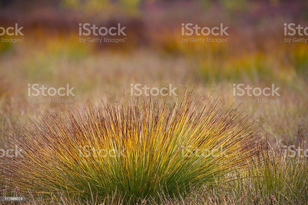 Multicolored autumn vegetation on the peat bog royalty-free stock photo