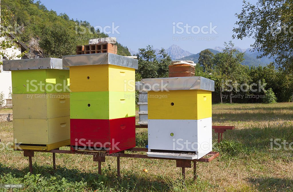 Multi-colored bee hive royalty-free stock photo