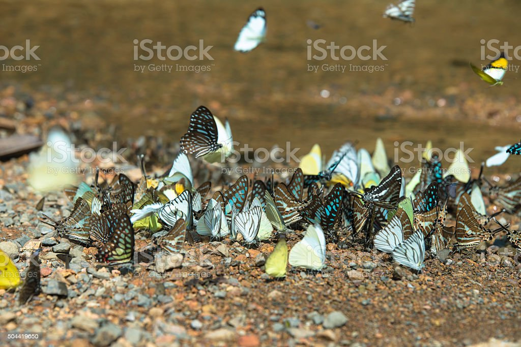 Multicolored butterflies. Many species in forrest. royalty-free stock photo