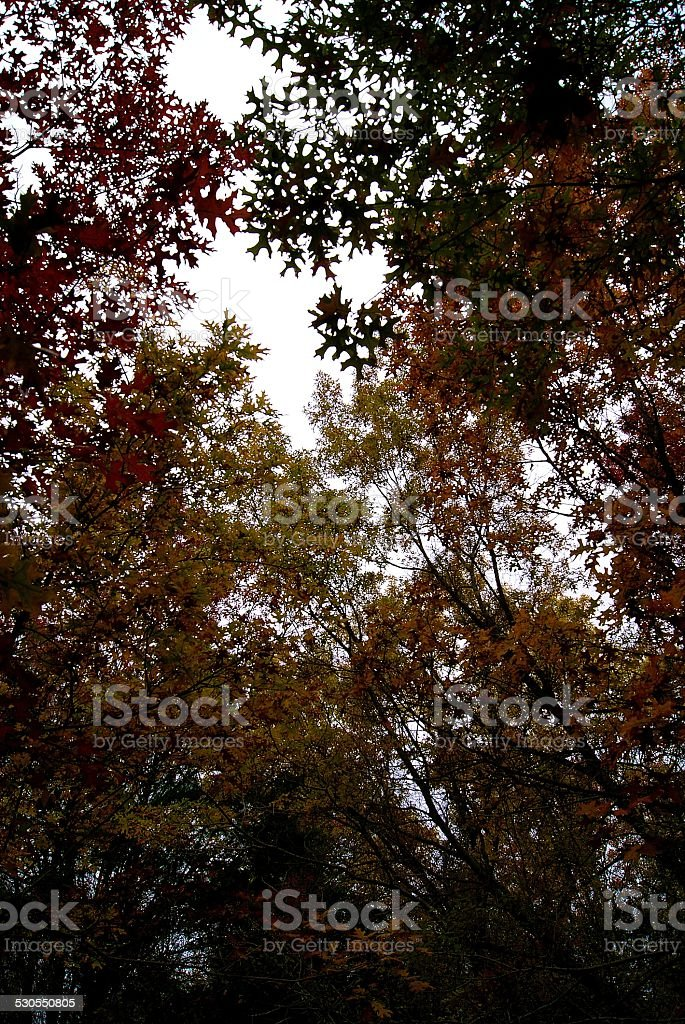 Multicolored Canopy royalty-free stock photo