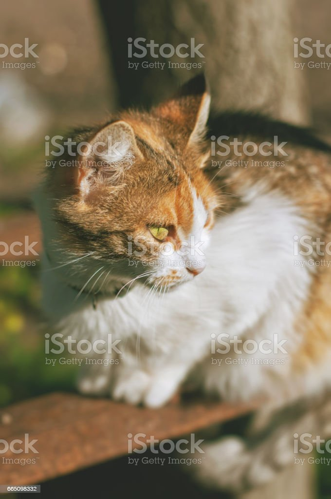 A multi-colored cat is sitting at outdoors on a sunny day stock photo