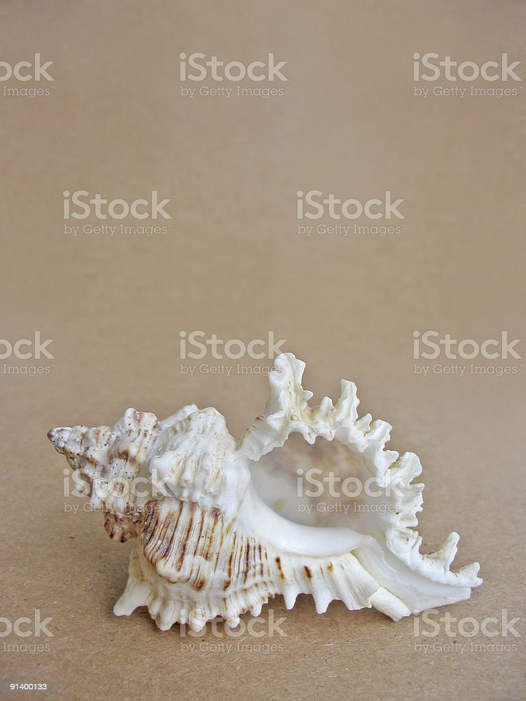 Multi-colored exotic shell royalty-free stock photo