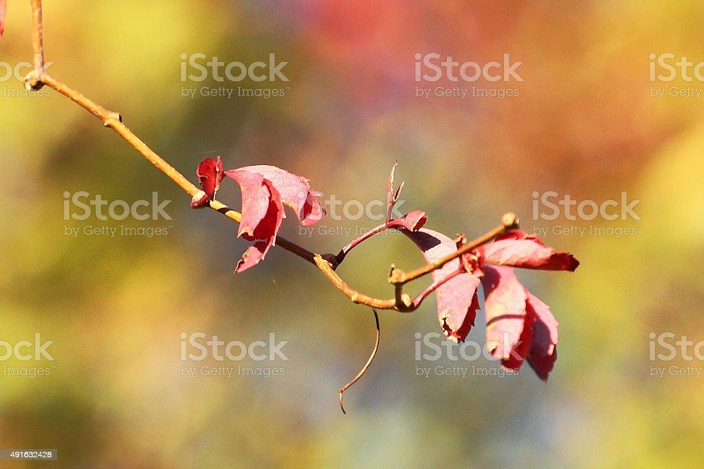 Multi couleur automne. photo libre de droits